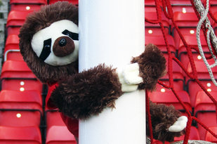 The Aberdeen FC Sloth